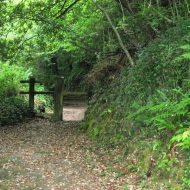 Cairn Woods 2010
